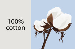 Card with a branch of cotton. And the text 100 Stock Image