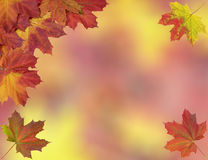 Card of bright autumn maple leaves Royalty Free Stock Photography