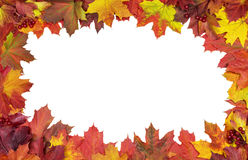 Card of bright autumn maple leaves Royalty Free Stock Photos