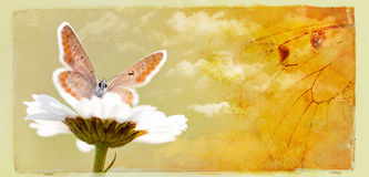 Card with butterfly Stock Photos