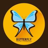 Card butterfly Stock Photos
