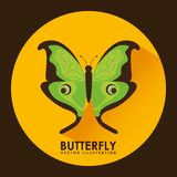 Card butterfly Royalty Free Stock Photography