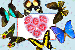 Card-Butterfly and Rose Royalty Free Stock Photography