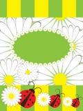 card chamomilehälsningsnyckelpigor Arkivfoton