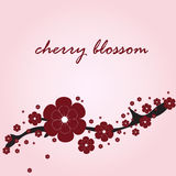 Card with cherry blossom Royalty Free Stock Photos