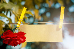 Card on the clothespin. Card with red rose fixed by clothespin to the rope Royalty Free Stock Images