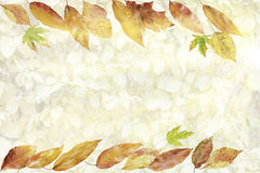 Card with collection of colorful autumn leafes Royalty Free Stock Photo