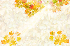 Card with collection of colorful autumn leaves Royalty Free Stock Photos