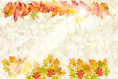 Card with collection of colorful autumn leaves Stock Image