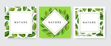 Card collection set with branches and leaf Stock Images