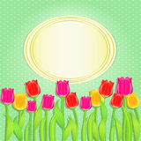 Card with Colorful Tulip Flowers Stock Photography