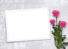 Card for congratulation with pink roses Stock Images
