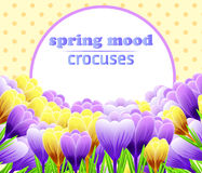 Card with crocuses. Spring flower. Perfect for wedding, greeting or invitation design. Vector Stock Photos