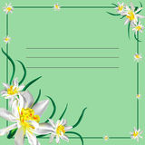 Card with daffodils Stock Images