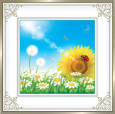 Card with daisies and sunflowers Royalty Free Stock Photography