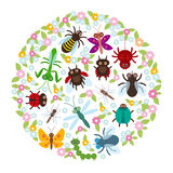 Card design in a circle Funny insects Spider butterfly dragonfly mantis beetle wasp ladybugs on white background. Vector. Illustration royalty free illustration