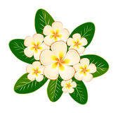 Card design, invitation with flowers frangipani (plumeria) Royalty Free Stock Photos