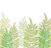 Card with fern Stock Image