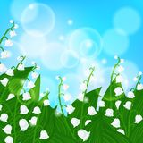 Card with field of lily-of-the-valley flowers. Vector spring background with field of lily-of-the-valley flowers on shining light sky blue bokeh. Illustration Stock Image
