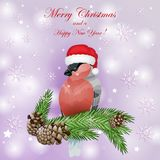 Card with fir tree branches and bullfinch birds. Over snowflakes background Stock Images