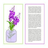 Card with Fireweed Flower Royalty Free Stock Photo