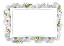 Card For Invitation Or Congratulation With Flowers Royalty Free Stock Photo
