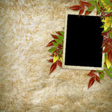 Card For The Holiday With Autumn Leaves Royalty Free Stock Photography