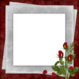 Card For The Holiday With Red Rose Royalty Free Stock Photography