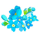 Card of forget-me-alpine a wild flower  vector illustration Royalty Free Stock Photography