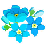 Card of forget-me-alpine a wild flower  vector illustration Royalty Free Stock Images