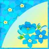 Card of forget-me-alpine a wild flower  vector illustration Stock Photos
