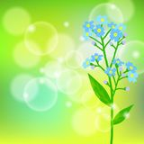 Card with forget me not flower on sun light Stock Image