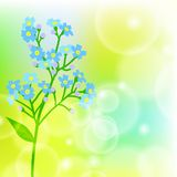 Card with forget me not flower on sun light Royalty Free Stock Photography