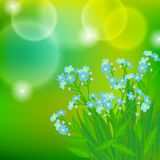 Card with forget me not flowers on sun light Stock Image