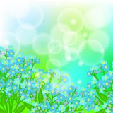 Card with forget me not flowers on sun light Royalty Free Stock Images
