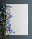 Card with fresh flowers forget-me Royalty Free Stock Images