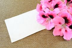 Card and geranium flowers. Blank card with geranium flowers for special events:mother's day, anniversary, birthday, valentine's day Royalty Free Stock Image