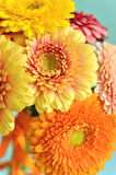 Card with gerberas. Royalty Free Stock Image