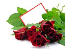 card gift red roses Royaltyfri Foto