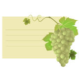 Card with grapes illustration. Business card with green grapes and leaves illustration Royalty Free Stock Photography