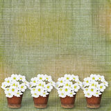 Card for greeting with garland of flower Stock Photo