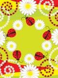 Card greeting with ladybirds Stock Photos