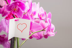 Card with Hand Drawn Heart Tied to Orchid Plant Stock Images