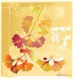 Card in herbarium with biloba. Old herbarium with biloba plant Stock Photo
