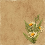 Card for the holiday with camomile. On the abstract background Royalty Free Stock Photography