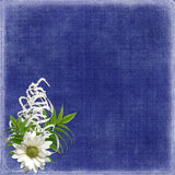 Card for the holiday with flowers and ribbons. Card for the holiday  with flowers and ribbons on the abstract background Stock Photography