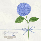Card with hydrangea. Beautiful greeting card with hydrangea flower. Vector illustration Royalty Free Stock Images