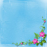 Card for invitation with blue and pink orchids Stock Images