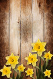 Card for invitation  with bouquet of flowers narcissus Royalty Free Stock Photos