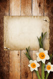 Card for invitation with bouquet of flowers narcissus Stock Images